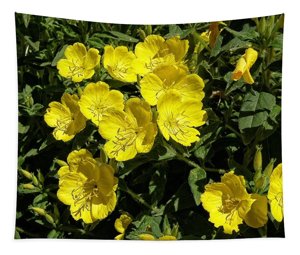 Oenothera Fruticosa Tapestry featuring the photograph Sundrops by Kathleen Bishop