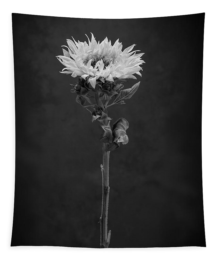 Sunflower Tapestry featuring the photograph Sunflower Number 5 B W by Steve Gadomski
