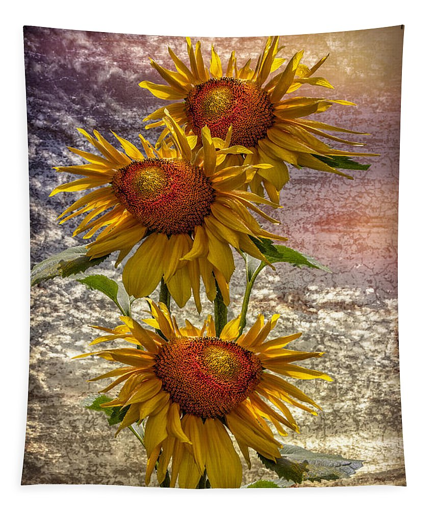 Clouds Tapestry featuring the photograph Sunflower Trio by Debra and Dave Vanderlaan