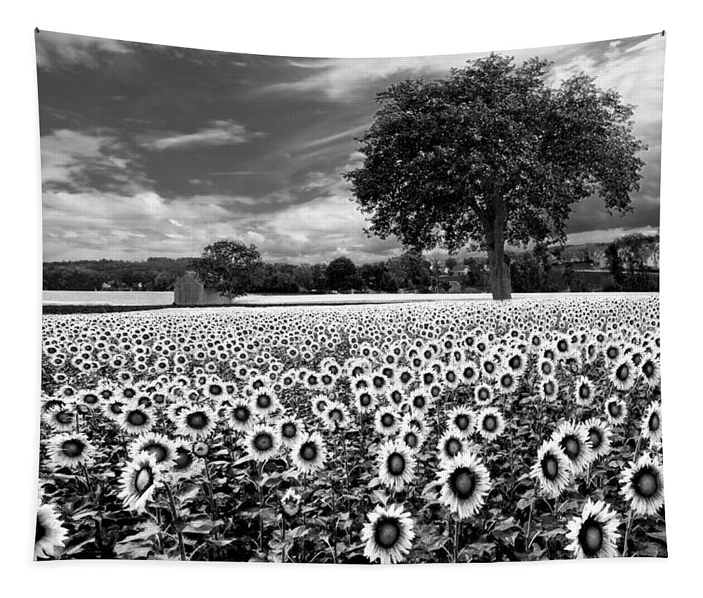 American Tapestry featuring the photograph Sunflowers In Black And White by Debra and Dave Vanderlaan