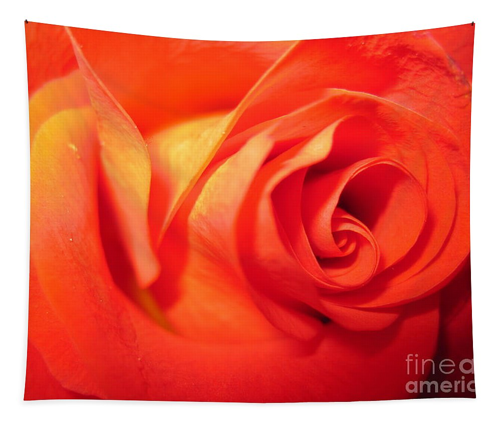 Floral Tapestry featuring the photograph Sunkissed Orange Rose 6 by Tara Shalton