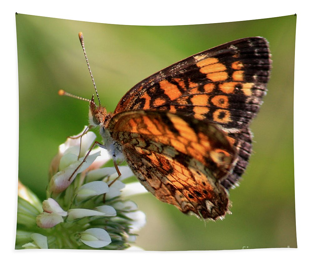 Butterfly Tapestry featuring the photograph Sunlight Through Butterfly Wings by Carol Groenen