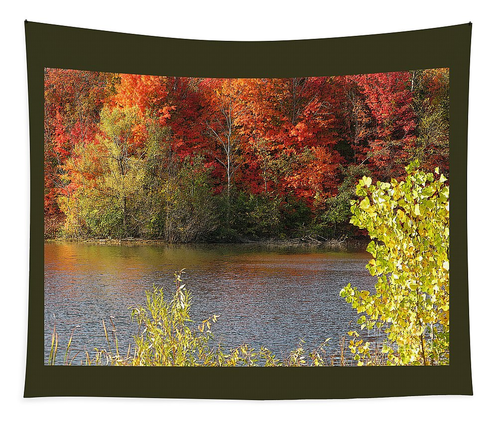 Autumn Tapestry featuring the photograph Sunlit Autumn by Ann Horn