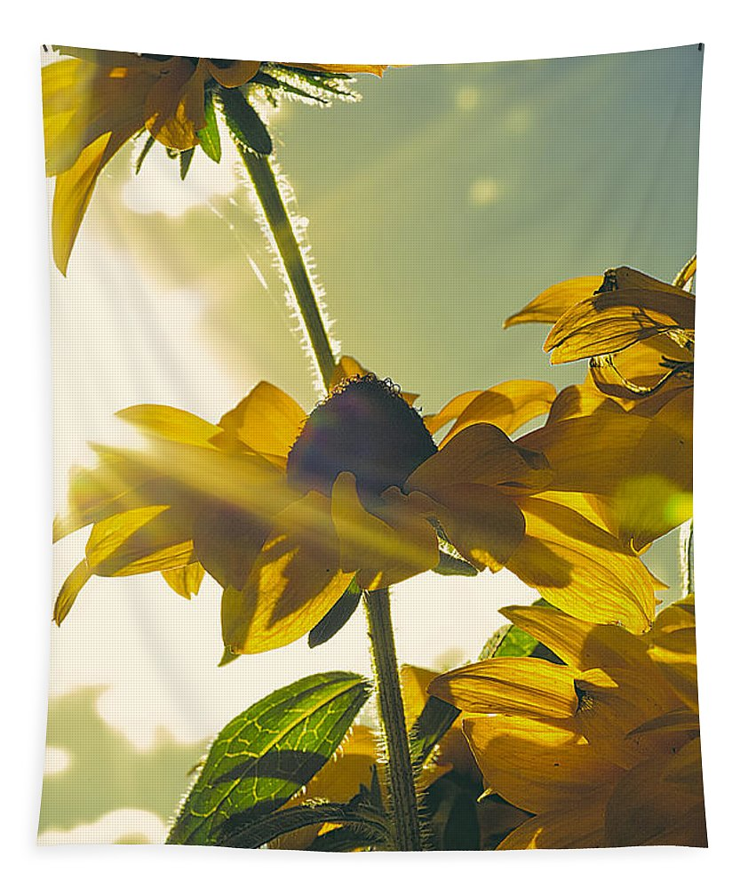 Sun Tapestry featuring the photograph Sunlit Daisies by Tim Palmer