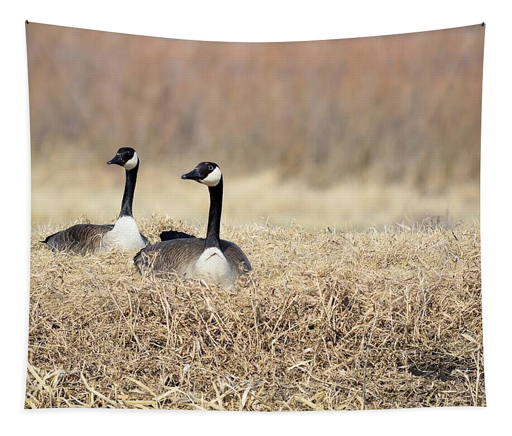 Geese Tapestry featuring the photograph Sunny Days by Bonfire Photography