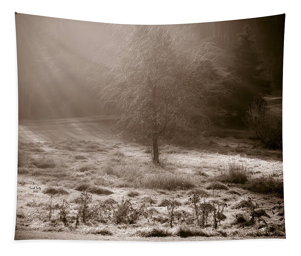 Sun Tapestry featuring the photograph Sunny Frosty Douglassville by Trish Tritz