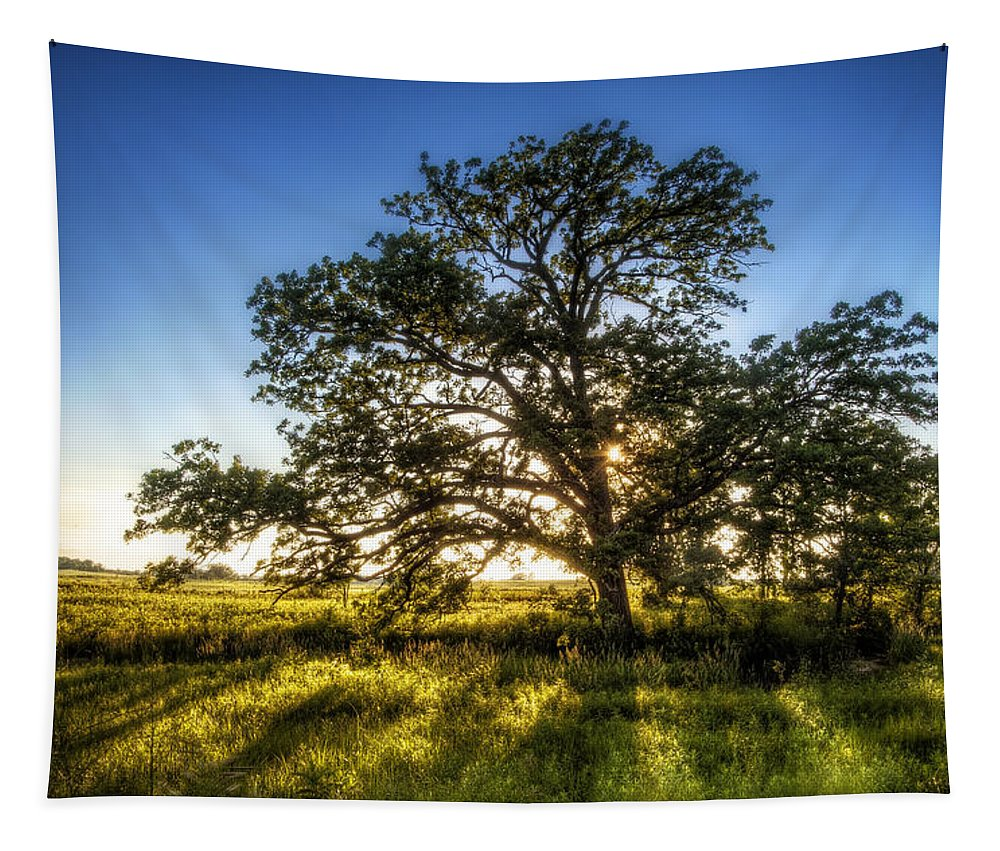 Sunset Tapestry featuring the photograph Sunset Oak by Scott Norris