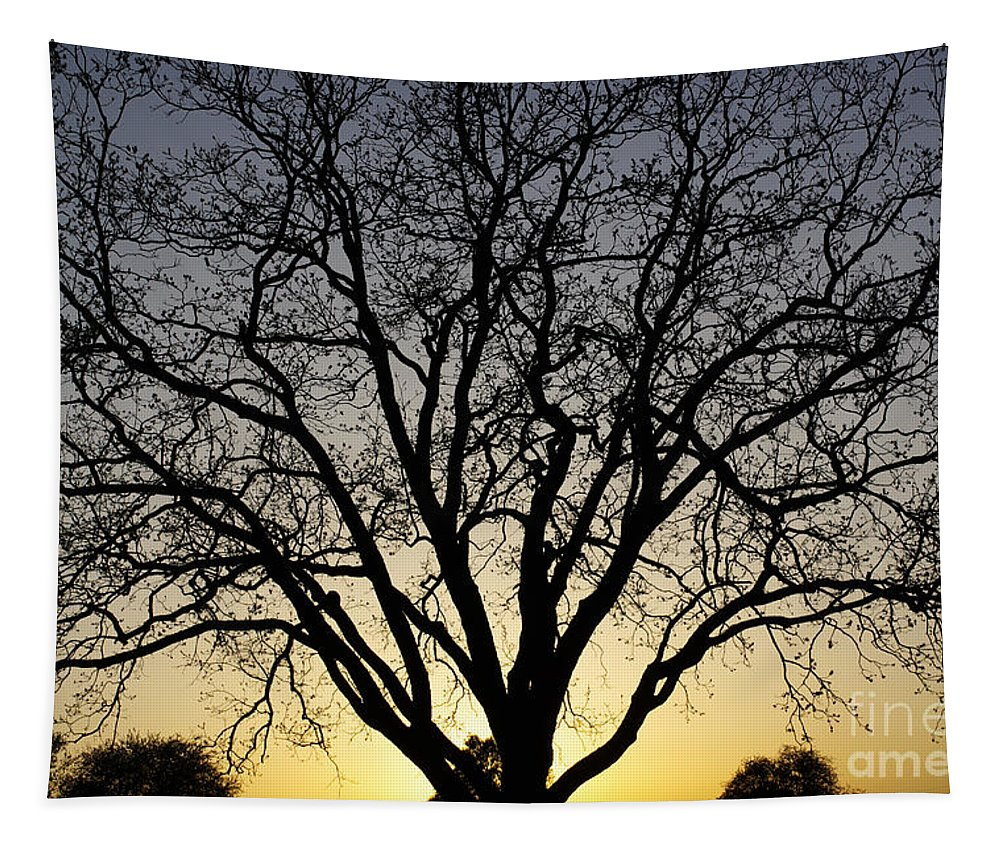 Sunset Tapestry featuring the photograph Sunset Tree by Gary Richards