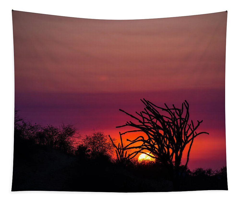 Sunset Tapestry featuring the photograph Sunset With Octopus Tree by Alex Lapidus