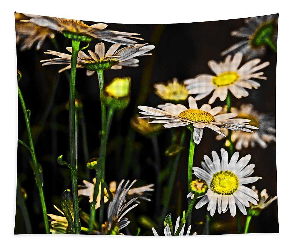Bellis Perennis Tapestry featuring the photograph Sunshine Daisies Butter Mellow by Tom Gari Gallery-Three-Photography