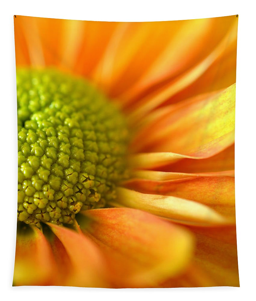 Orange Daisy Tapestry featuring the photograph Sunshine by Deb Halloran