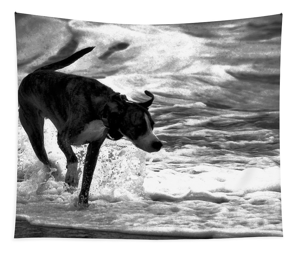 Black And White Tapestry featuring the photograph Surfer Bird by Robert McCubbin