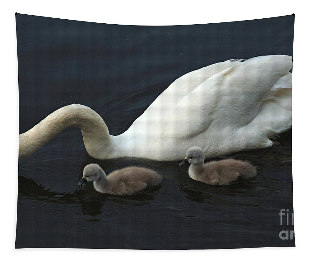 Swan Tapestry featuring the photograph Swan And Signets by Bob Christopher