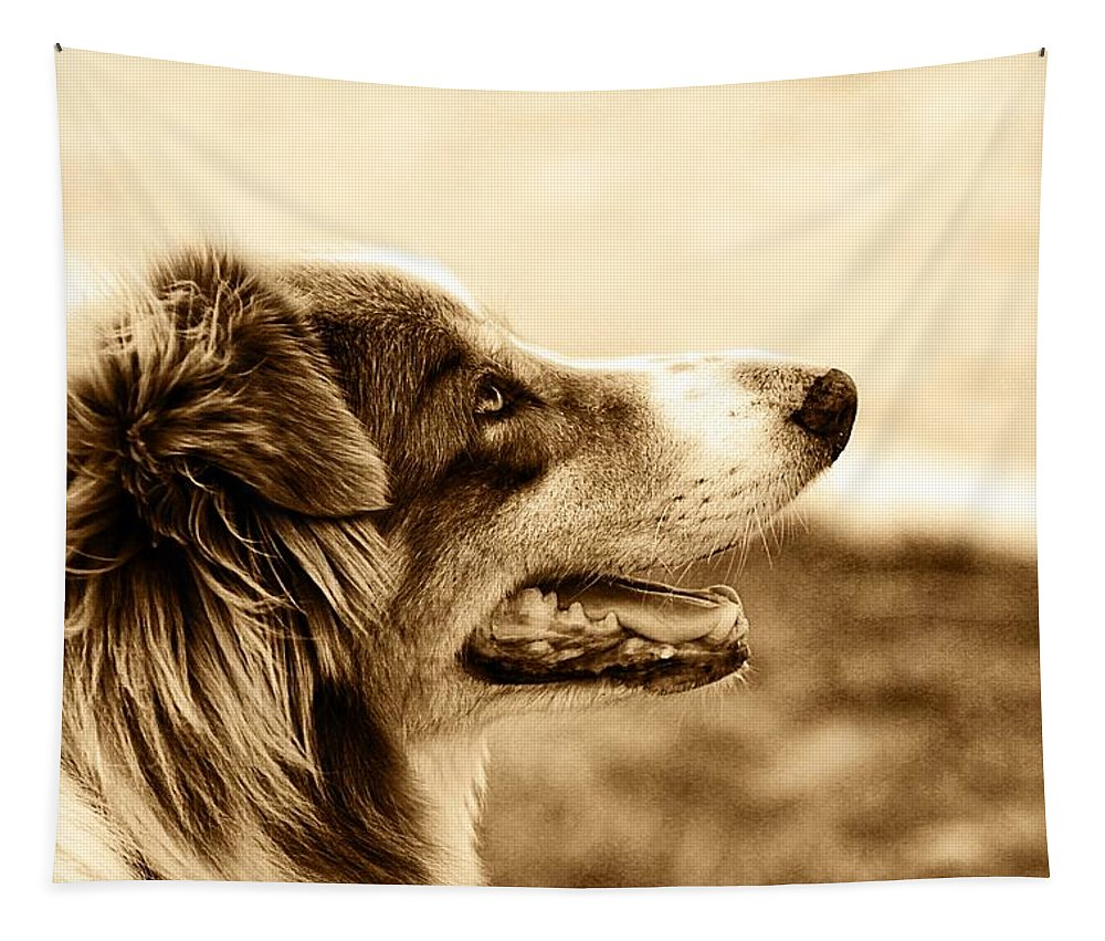 Dog Tapestry featuring the photograph Sweet Doggie by Alice Gipson
