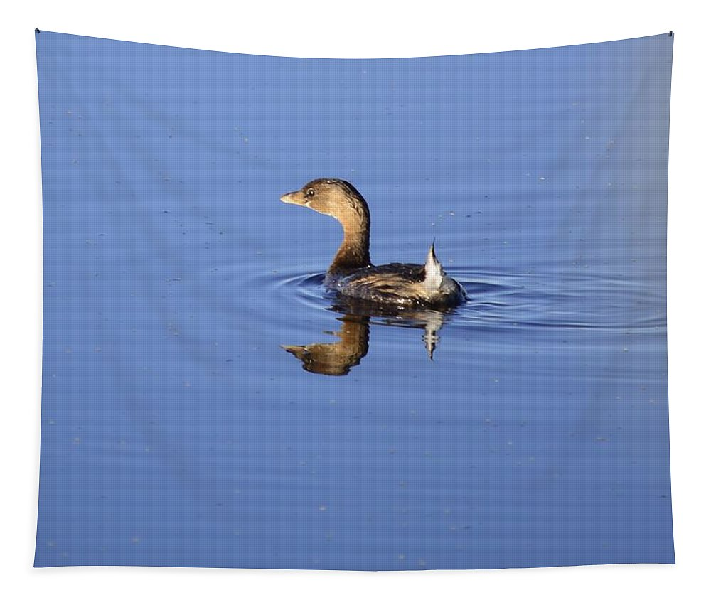 Grebe Tapestry featuring the photograph Swimming Grebe by Bonfire Photography