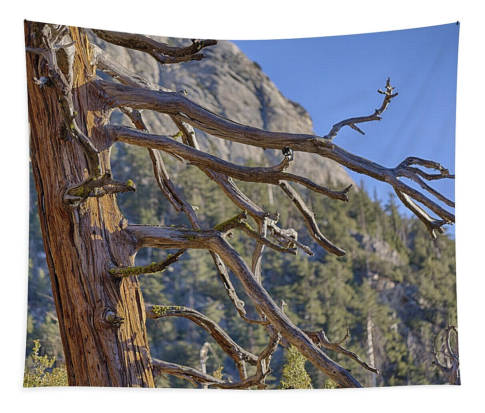 Tree Tapestry featuring the photograph Tahquitz And The Pine by Scott Campbell