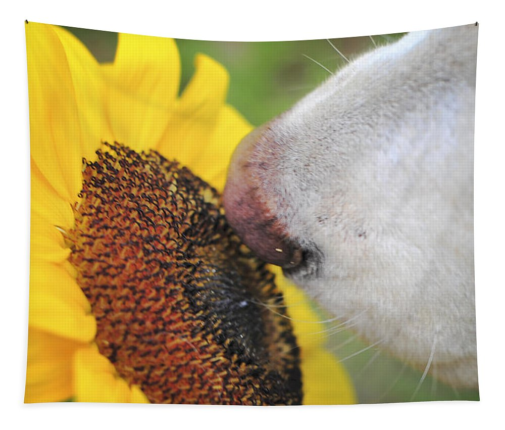 Flower Tapestry featuring the photograph Take Time To Smell The Sunflowers by Terry DeLuco