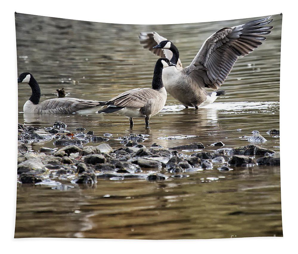 Canada Geese Tapestry featuring the photograph Taking Umbrage by Belinda Greb