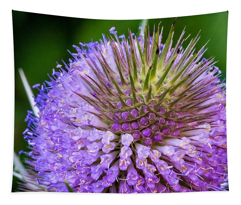 Flower Tapestry featuring the photograph Teasel by Steve Harrington