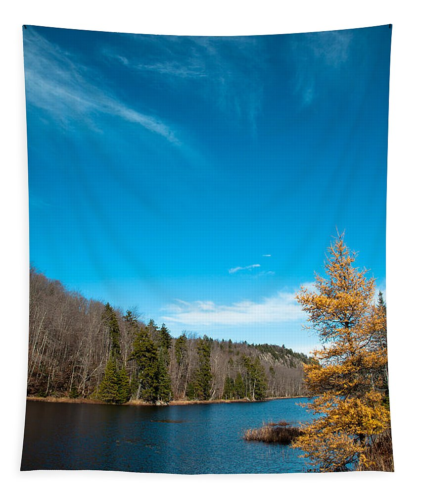 Adirondack's Tapestry featuring the photograph The Alpine Larch Tree On Bald Mountain Pond by David Patterson