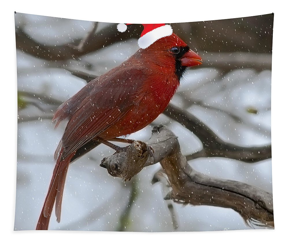Northern Cardinal Tapestry featuring the photograph The Best Of The Season.. by Nina Stavlund