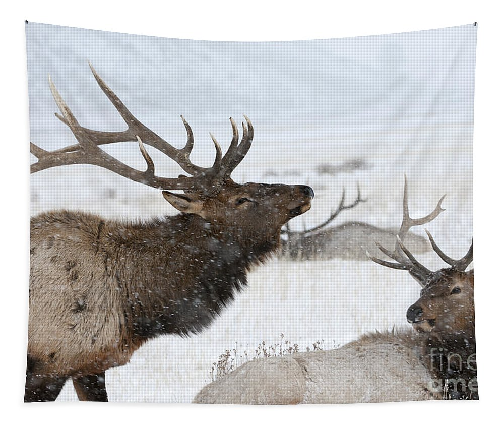 Elk Tapestry featuring the photograph The Big Gathering by Wildlife Fine Art