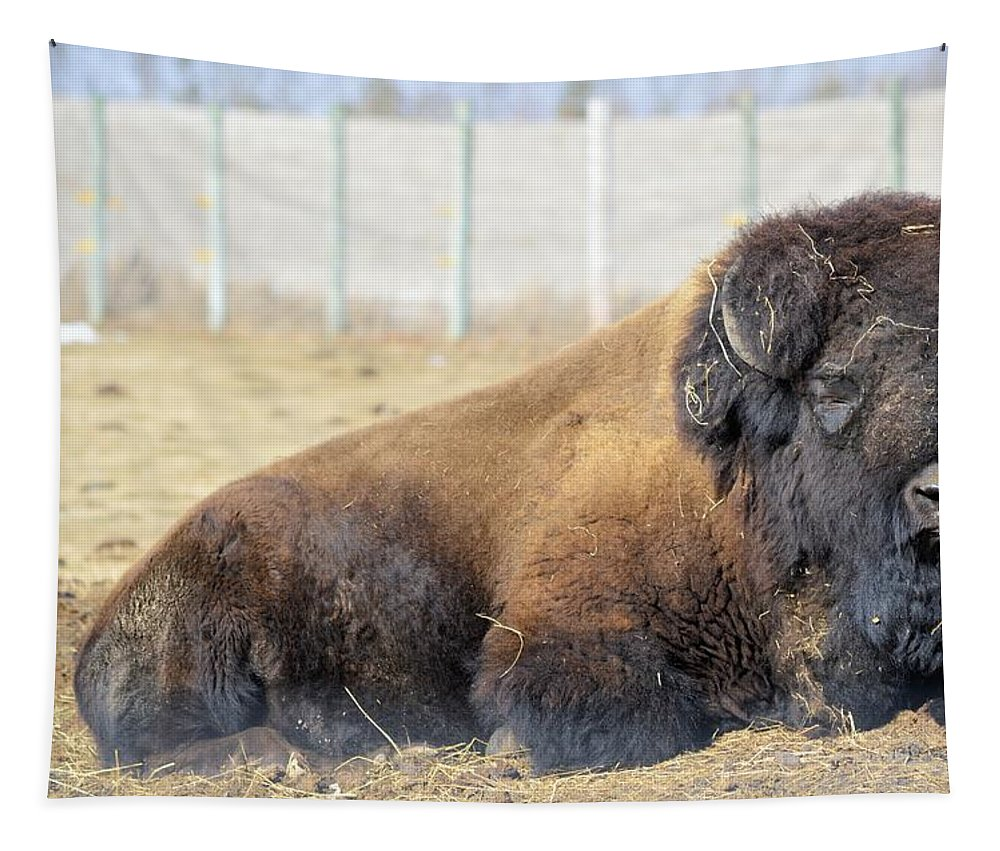 Bison Tapestry featuring the photograph The Bison by Bonfire Photography
