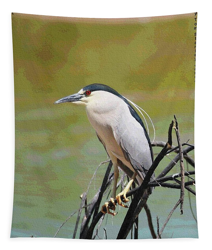 The Black Crown Night Heron Tapestry featuring the photograph The Black Crown Night Heron Waiting For Dark by Tom Janca