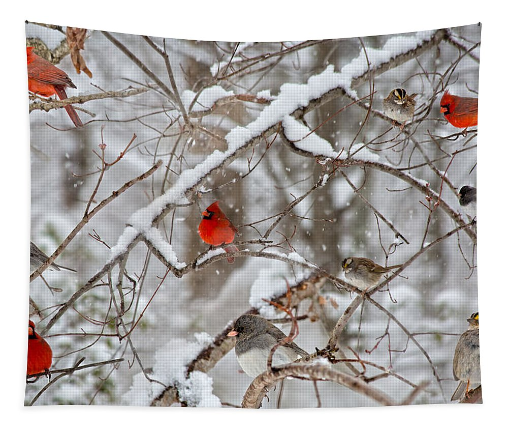 Red Tapestry featuring the photograph The Cardinal Rules by Betsy Knapp