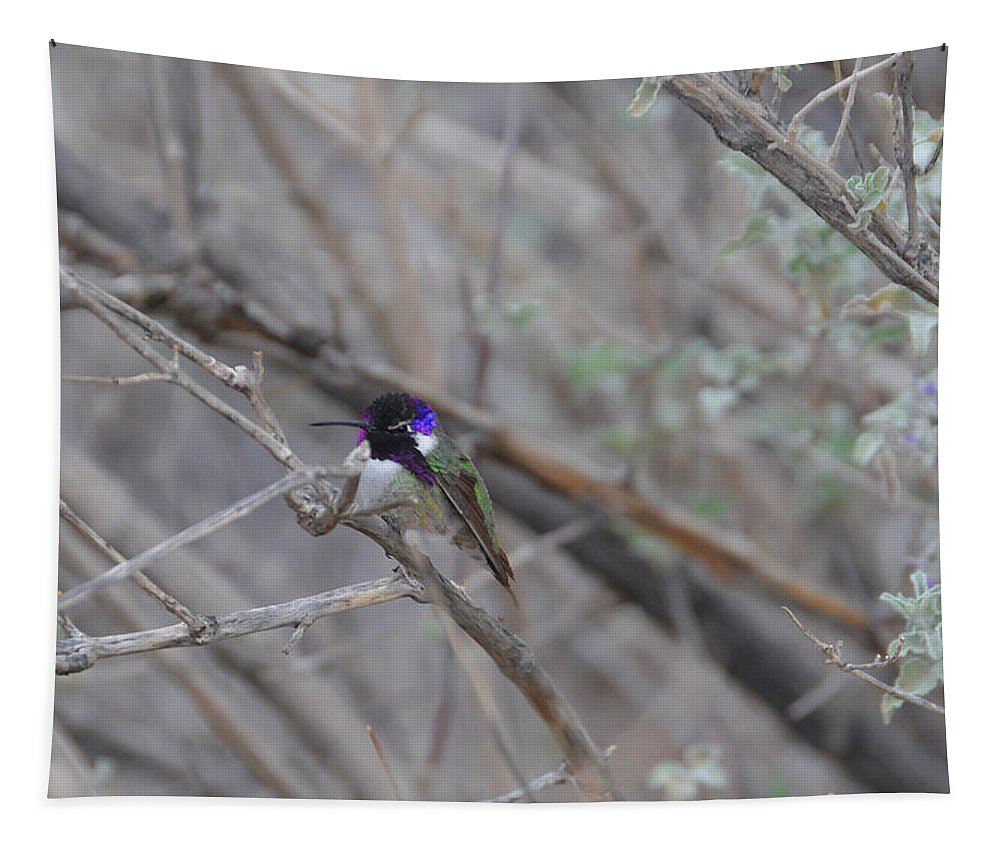 Hummers Tapestry featuring the photograph The Colors Of The Costas by Lynn Bauer