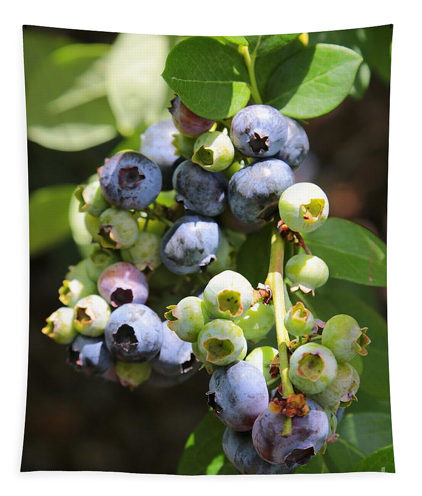 Blueberries Tapestry featuring the photograph The Freshest Blueberries by Carol Groenen