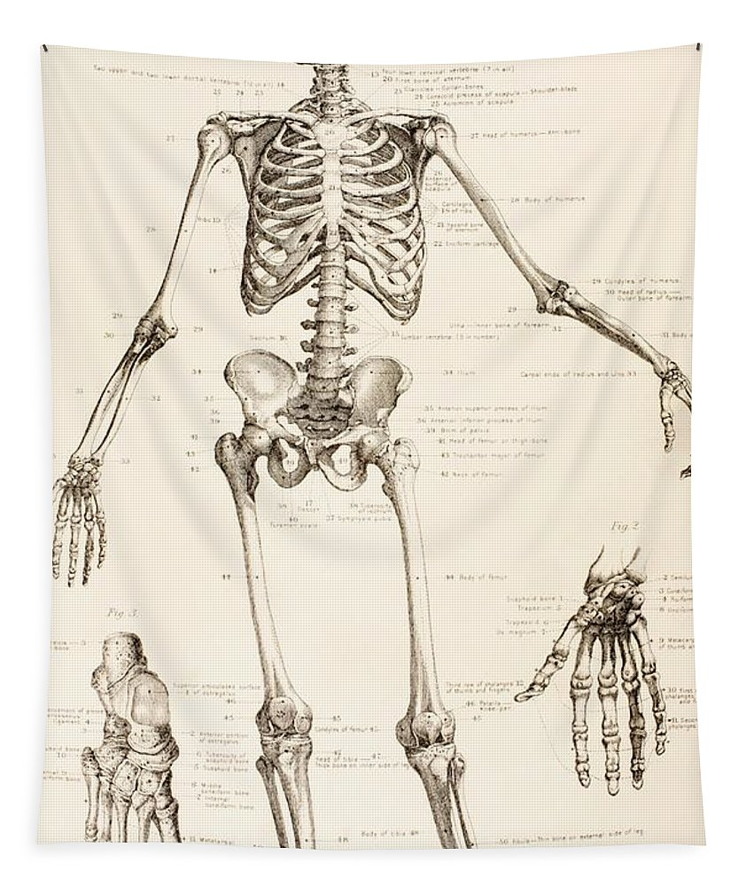 The Human Skeleton Tapestry