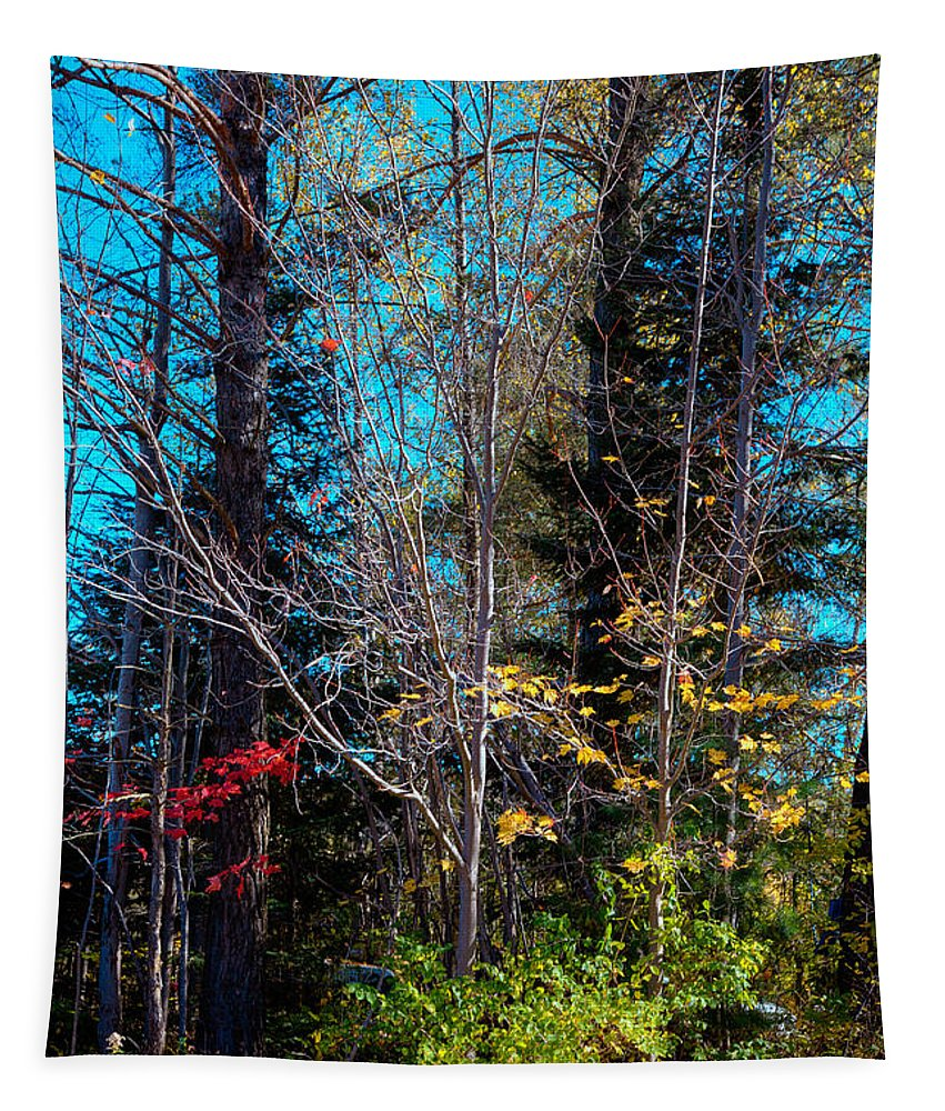 Adirondack's Tapestry featuring the photograph The Last Days Of Autumn by David Patterson
