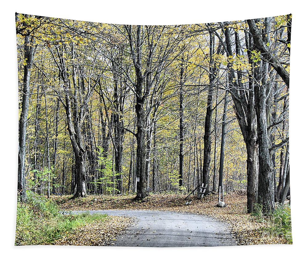 Autumn Tapestry featuring the photograph The Leaves Are Falling by Deborah Benoit