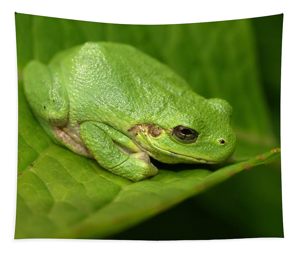 Jim Peterson Nature Photography Frog Frogs Green Tree Leaf Leaves Amphibian Amphibians Little Small Delicate Cute Cutie Adorable Gardens Garden Backyard Backyards Back Yard Yards Creature Creatures Animal Animals North America American Mn Minnesota Cyrus Macro Vivid Wildlife Beautiful Close Up Close-up Plant Plants Wild Summer Summertime Camouflage Gray Horizontal Cope's Copes Cope Camouflaged Tapestry featuring the photograph The Little Frog by James Peterson