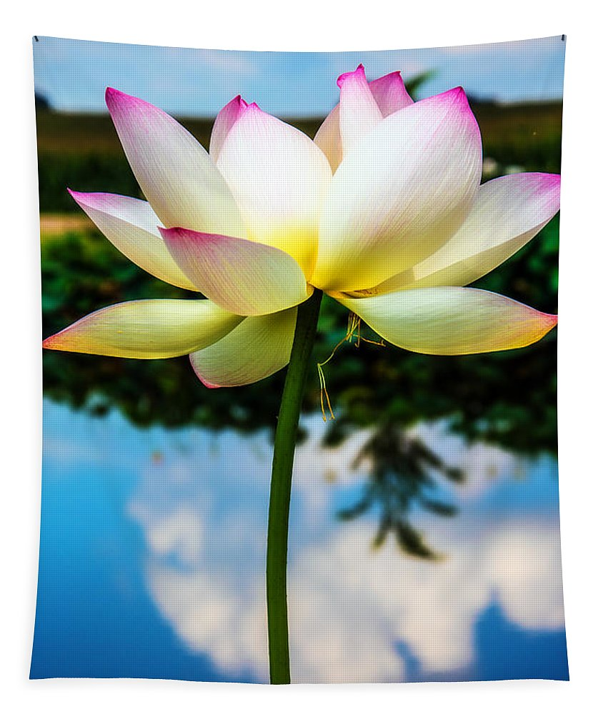 Lotus Tapestry featuring the photograph The Lotus Blossom by Jon Woodhams
