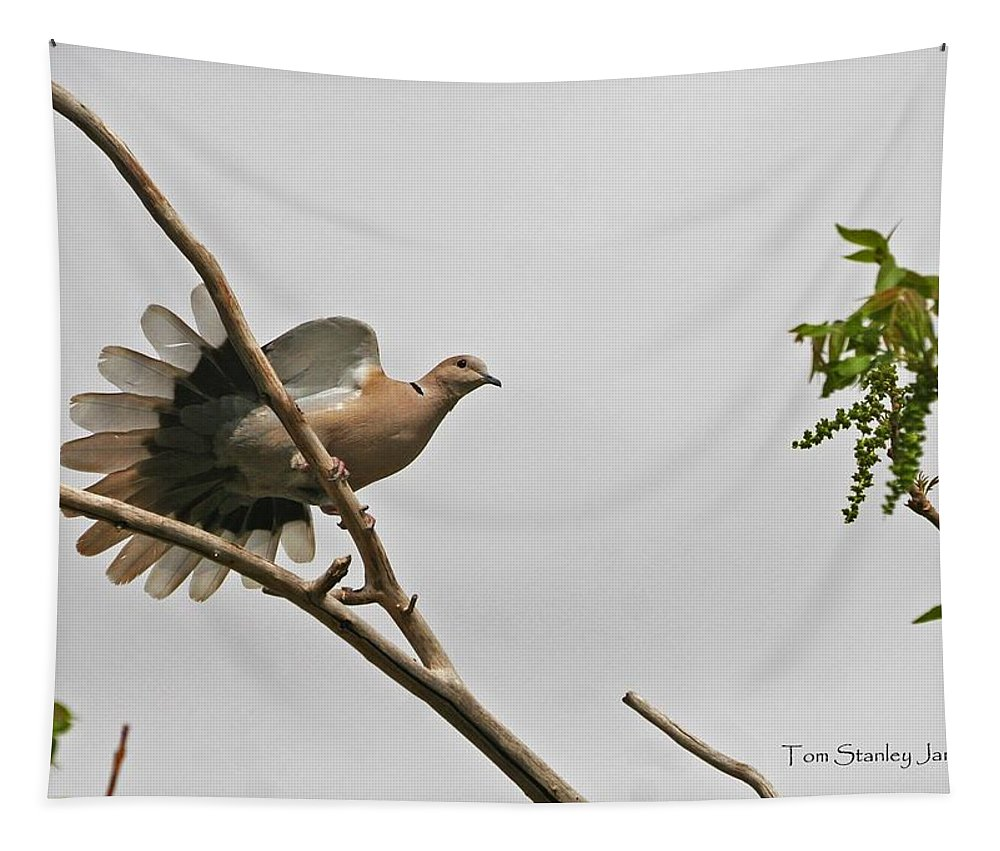 The New Dove Tapestry featuring the photograph The New Dove In Town by Tom Janca