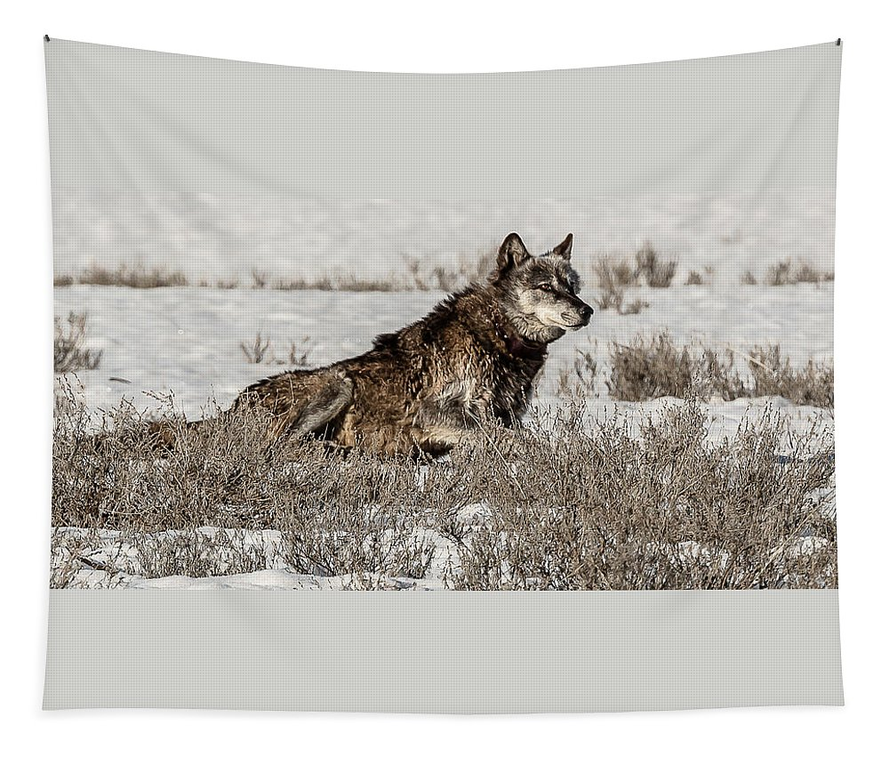 Patriarch Tapestry featuring the photograph The Patriarch Alpha by Yeates Photography