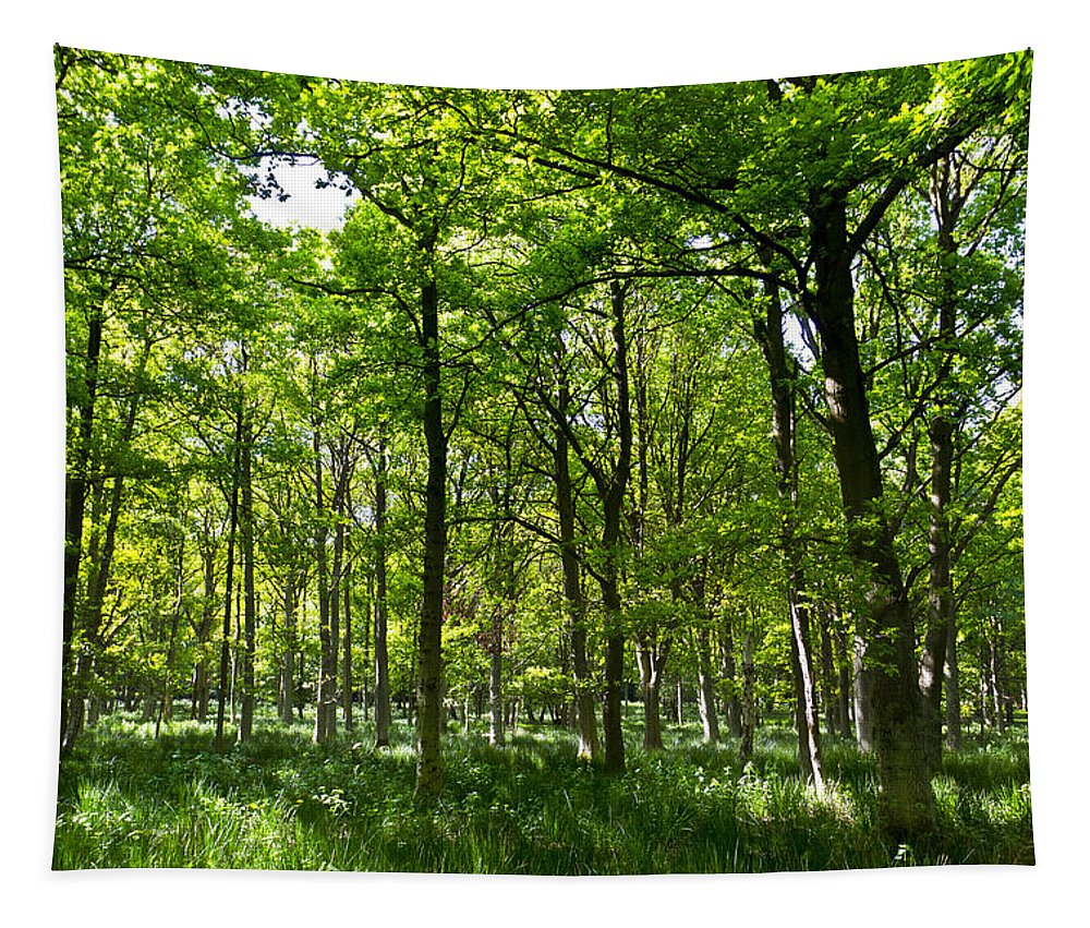 Tree Tapestry featuring the photograph The Peaceful Forest by David Pyatt