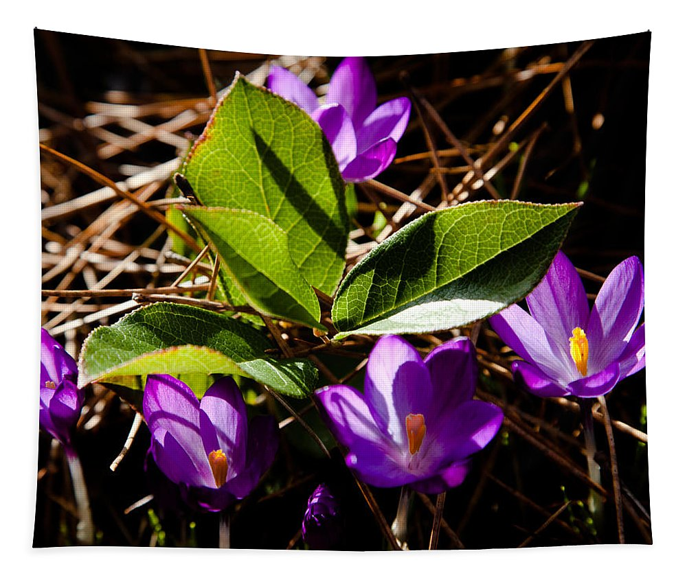Floral Tapestry featuring the photograph The Purple Crocus by David Patterson