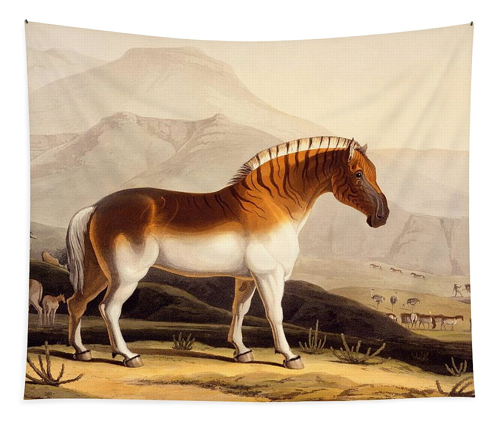 Quagga Tapestry featuring the painting The Quahkah by Samuel Daniell