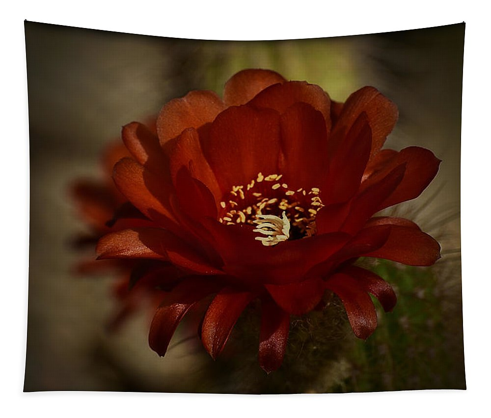 Red Torch Cactus Tapestry featuring the photograph The Red Torch by Saija Lehtonen