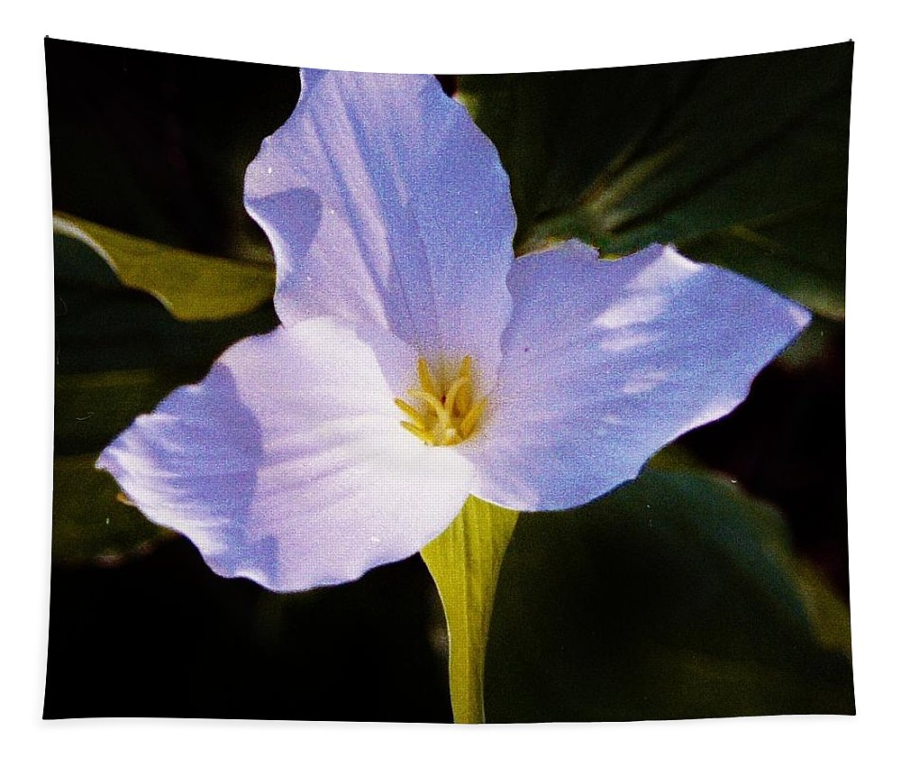 Trilliums Tapestry featuring the photograph The Trillium Cross by Daniel Thompson
