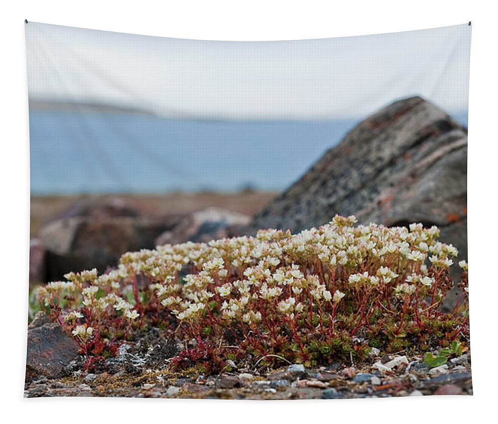 Festblues Tapestry featuring the photograph The Tundra... by Nina Stavlund