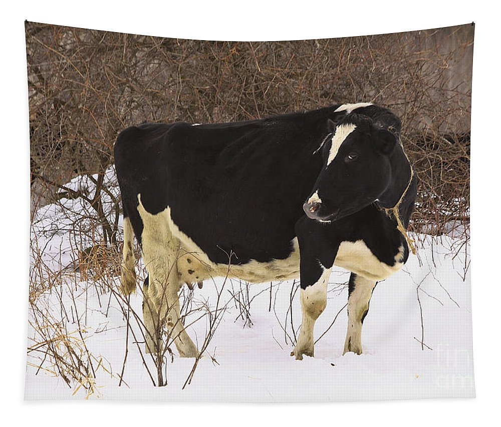 Winter Tapestry featuring the photograph This Is My Good Side by Deborah Benoit