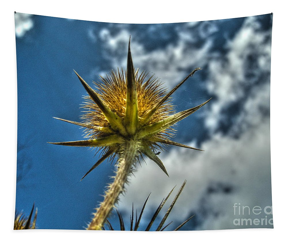 Prickly Thistle Tapestry featuring the photograph Thistle And Sky by Nina Ficur Feenan