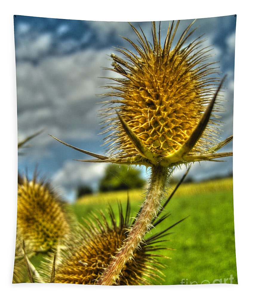 Prickly Thistle Tapestry featuring the photograph Thistle by Nina Ficur Feenan