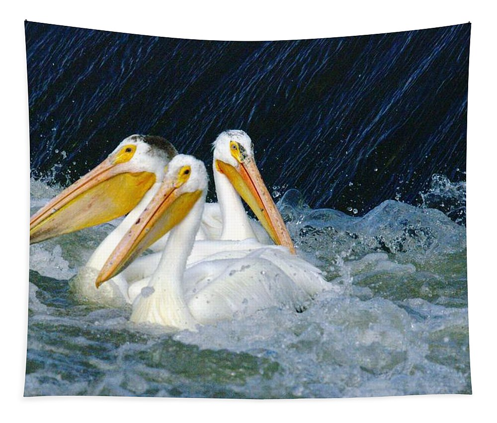 Pelicans Tapestry featuring the photograph Three Buddies Hanging Out by Jeff Swan