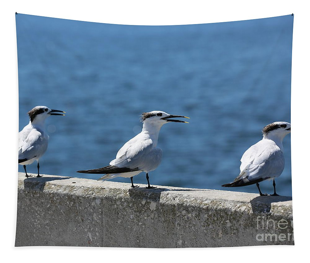 Terns Tapestry featuring the photograph Three Turning Terns by Carol Groenen