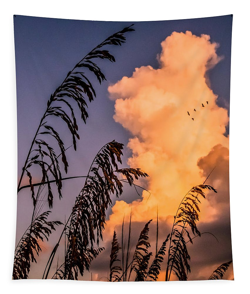 Canary Grass Tapestry featuring the photograph Through The Grass by Zina Stromberg